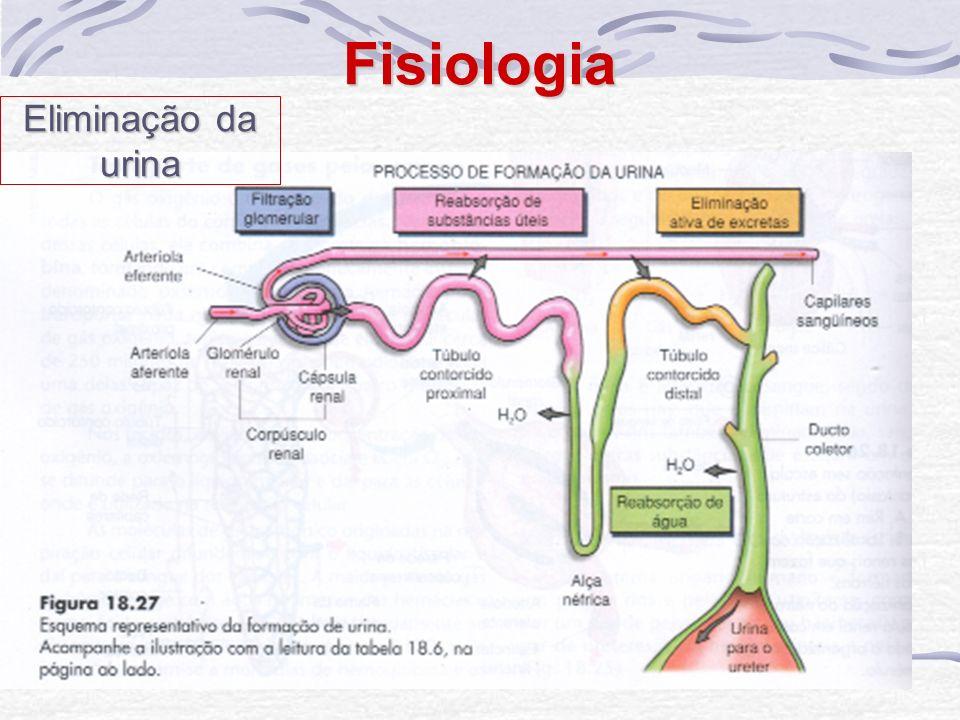 Fisiologia Eliminação da urina