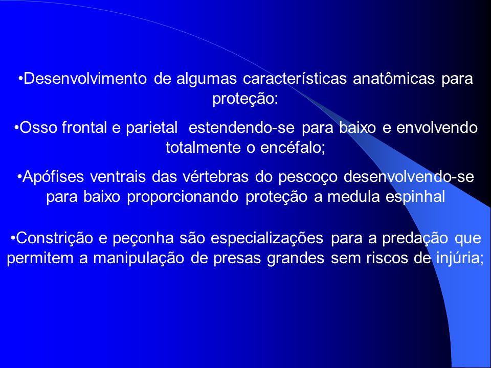 Desenvolvimento de algumas características anatômicas para proteção: