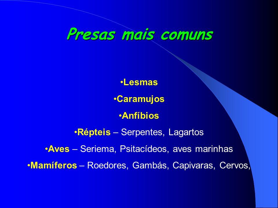Presas mais comuns Lesmas Caramujos Anfíbios