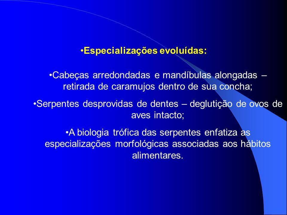 Especializações evoluídas: