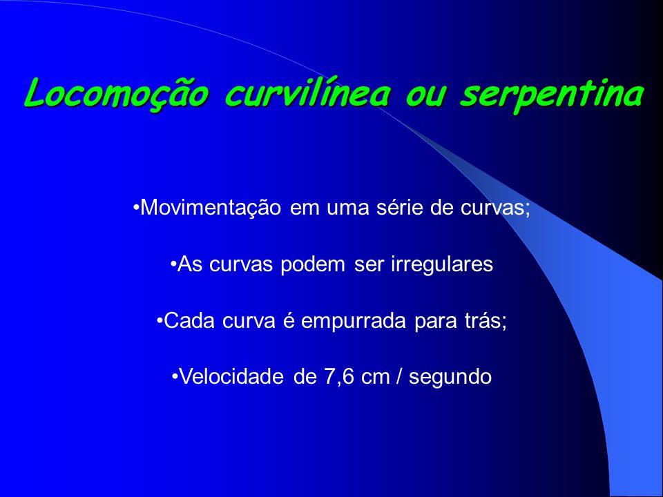 Locomoção curvilínea ou serpentina