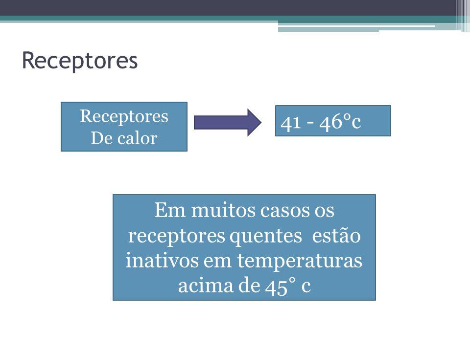 Receptores Receptores. De calor. 41 - 46°c.