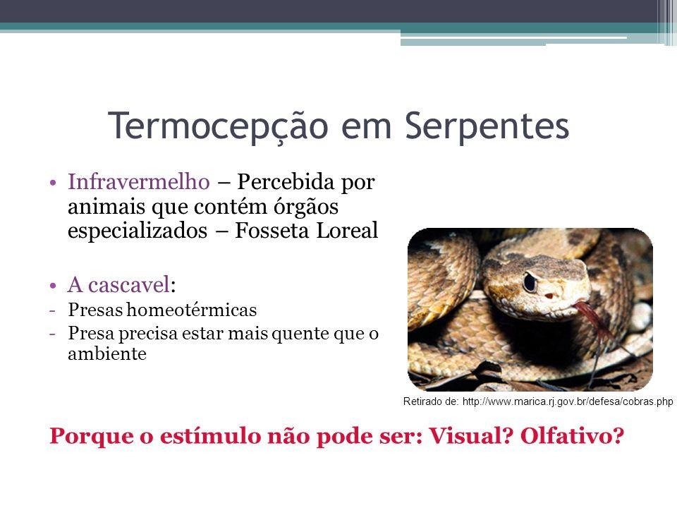 Termocepção em Serpentes