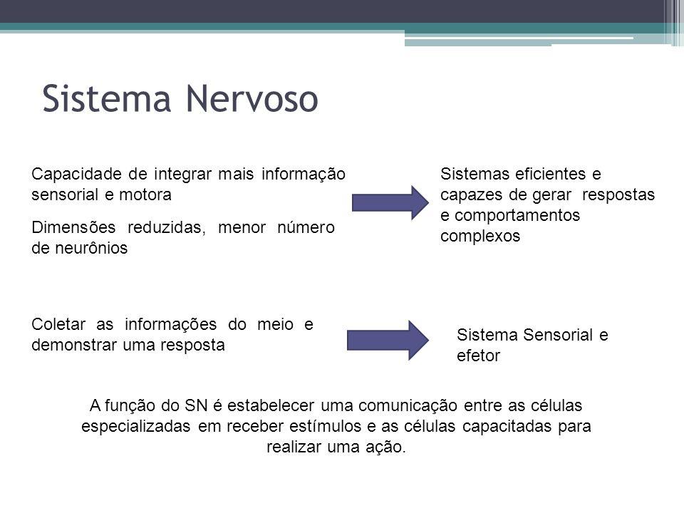 Sistema Nervoso Capacidade de integrar mais informação sensorial e motora.