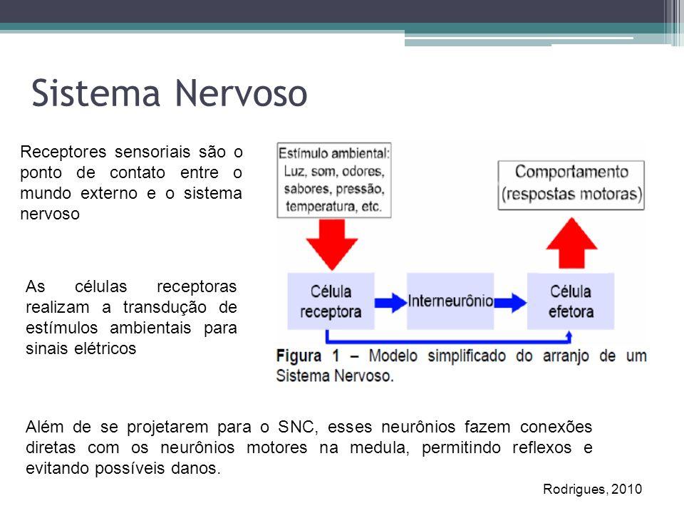 Sistema NervosoReceptores sensoriais são o ponto de contato entre o mundo externo e o sistema nervoso.