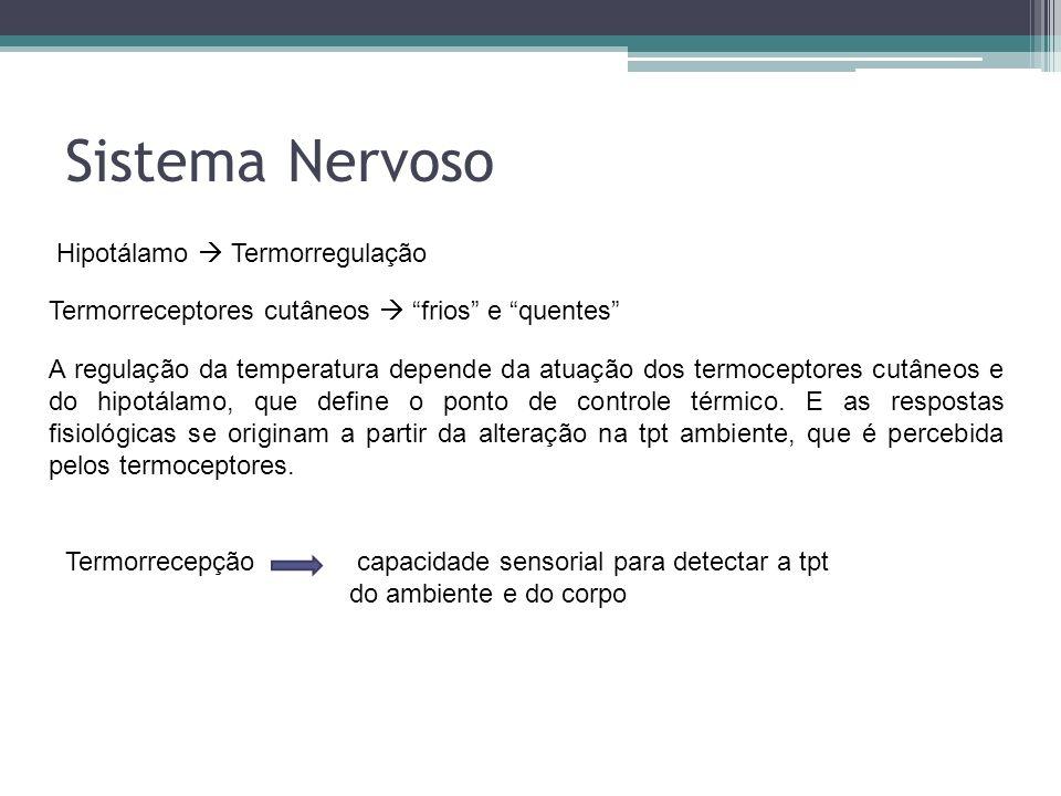 Sistema Nervoso Hipotálamo  Termorregulação
