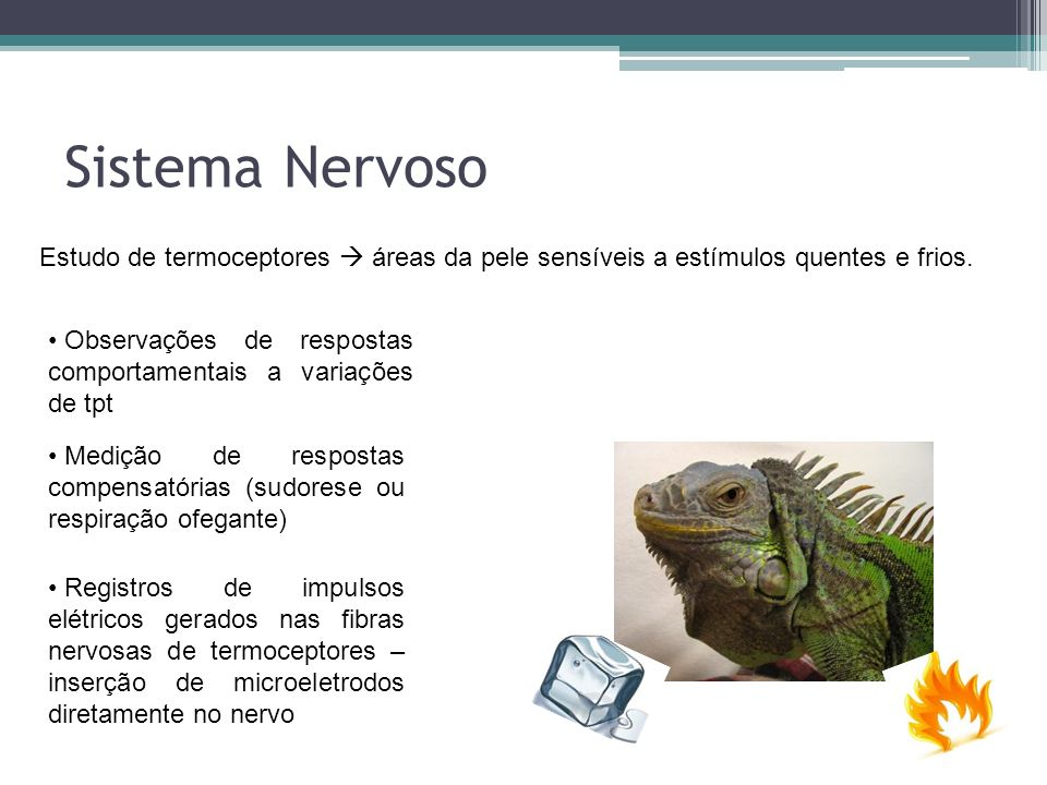 Sistema Nervoso Estudo de termoceptores  áreas da pele sensíveis a estímulos quentes e frios.