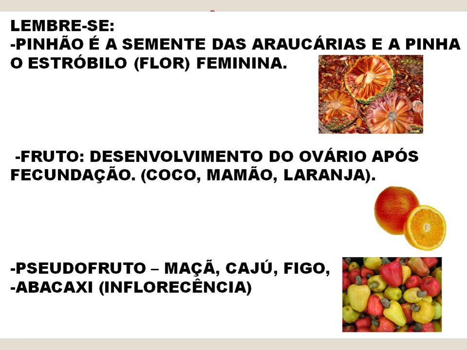 BOTÂNICA Algas Avasculares Briófitas Criptógamas Reino Vegetal