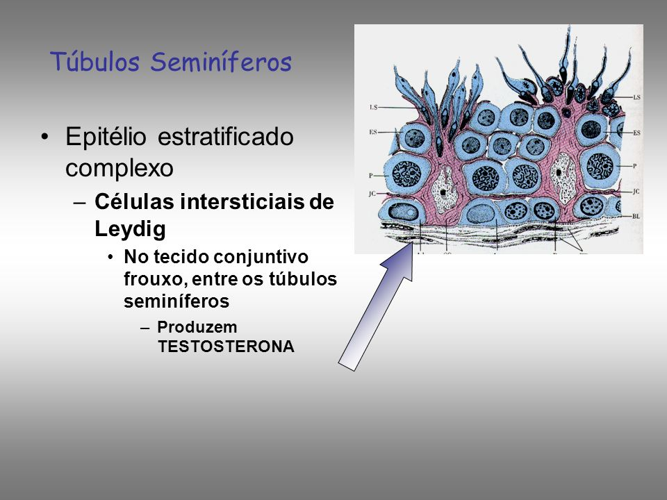 Epitélio estratificado complexo