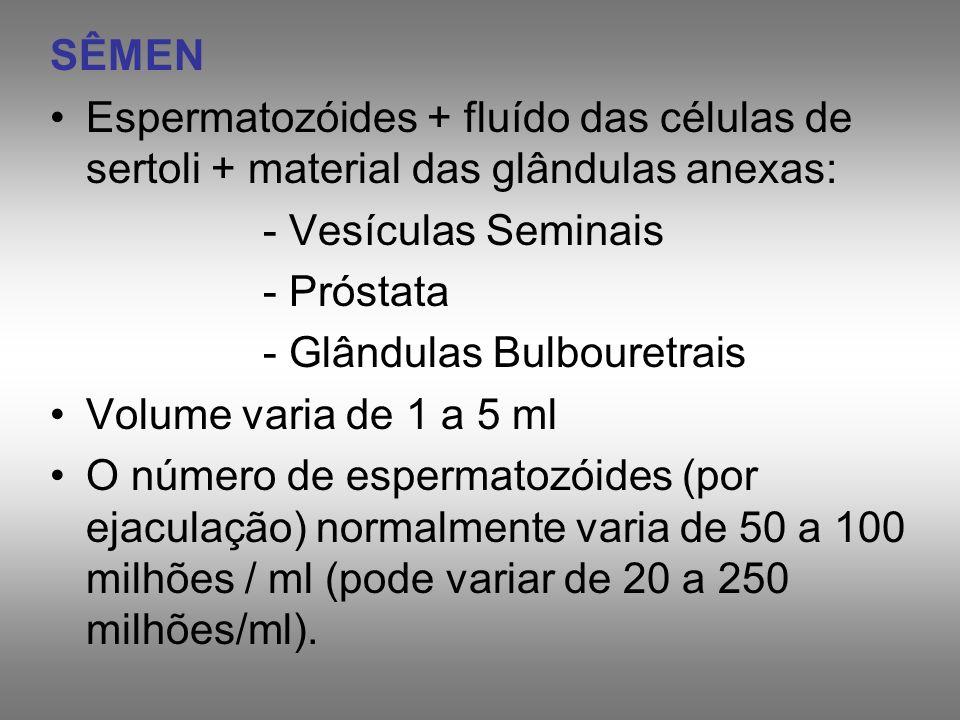 SÊMENEspermatozóides + fluído das células de sertoli + material das glândulas anexas: - Vesículas Seminais.