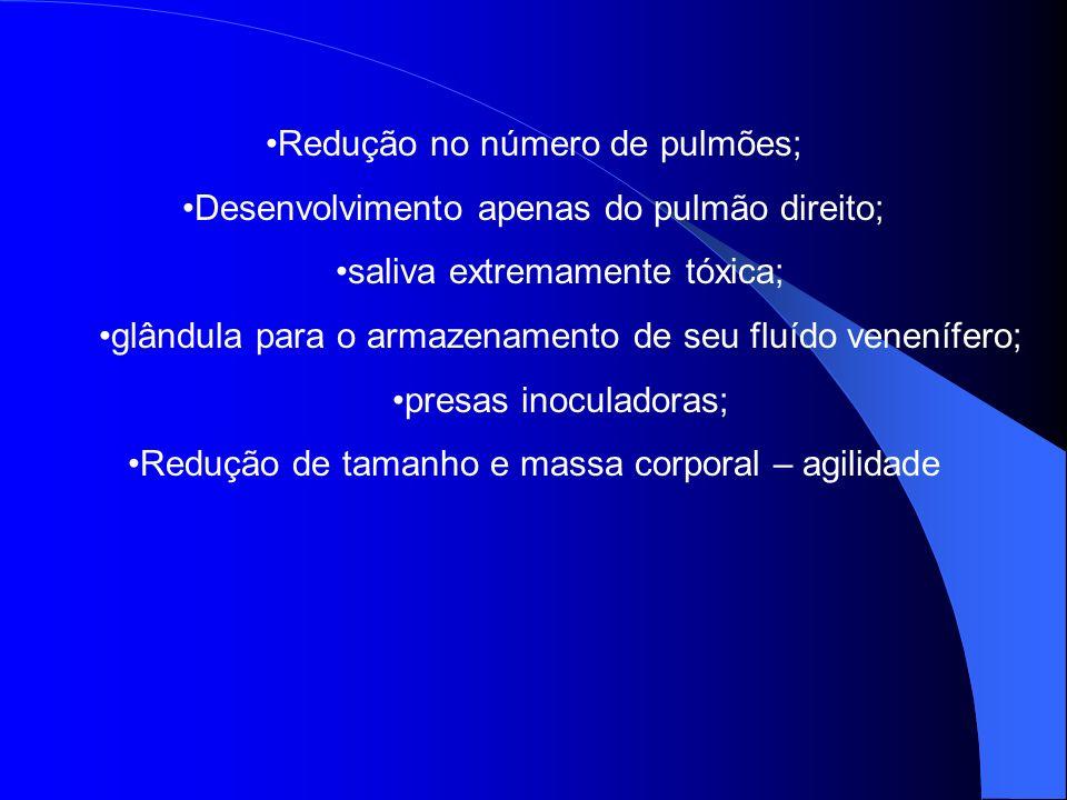 Redução no número de pulmões;