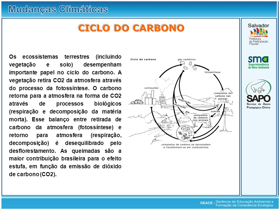 Ciclo do Carbono CICLO DO CARBONO