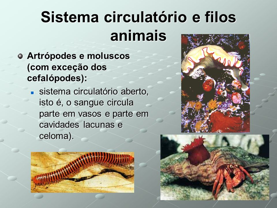 Sistema circulatório e filos animais