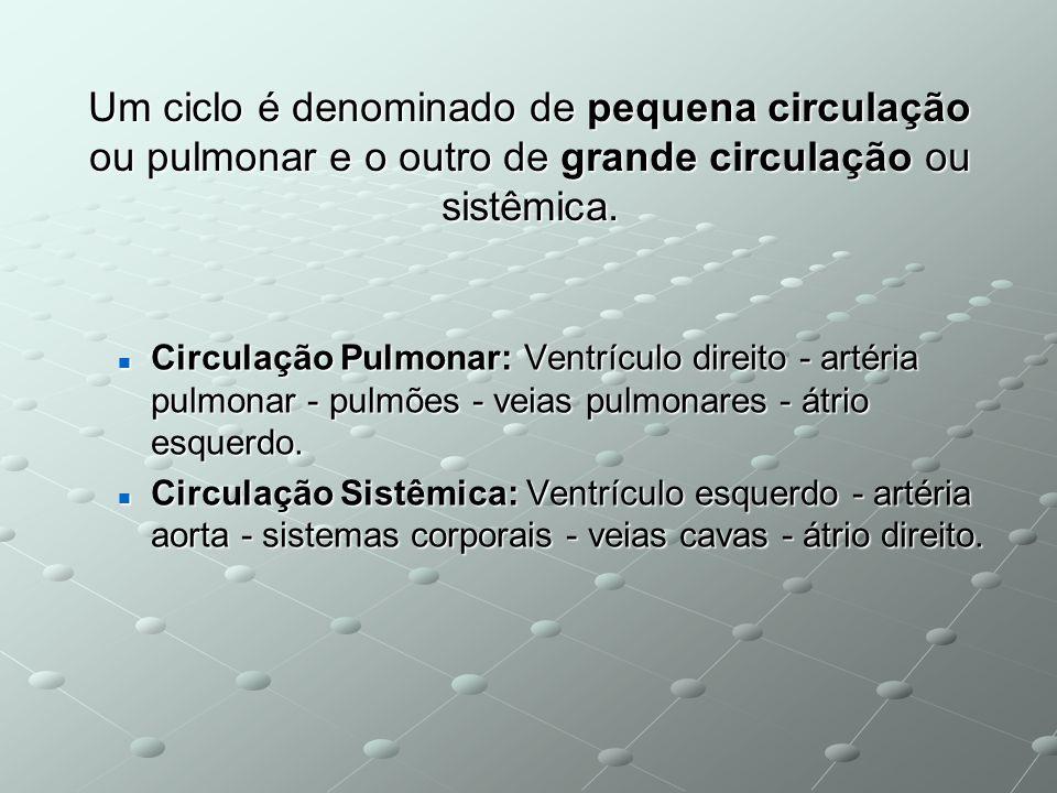 Um ciclo é denominado de pequena circulação ou pulmonar e o outro de grande circulação ou sistêmica.