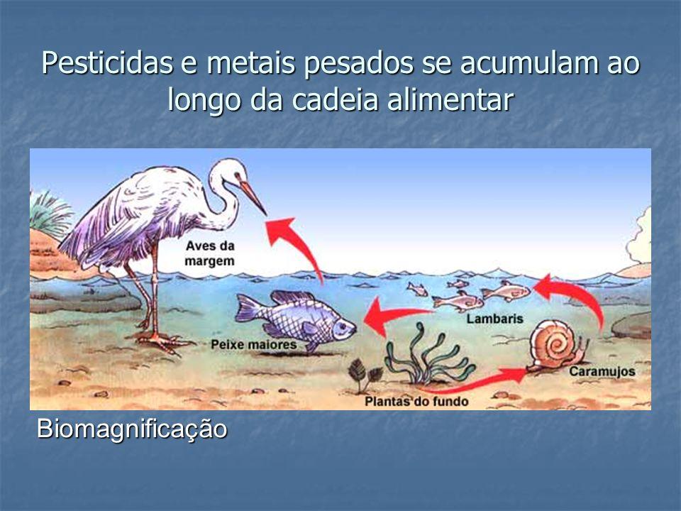 Pesticidas e metais pesados se acumulam ao longo da cadeia alimentar