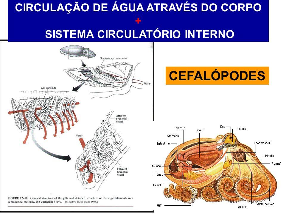 CIRCULAÇÃO DE ÁGUA ATRAVÉS DO CORPO + SISTEMA CIRCULATÓRIO INTERNO