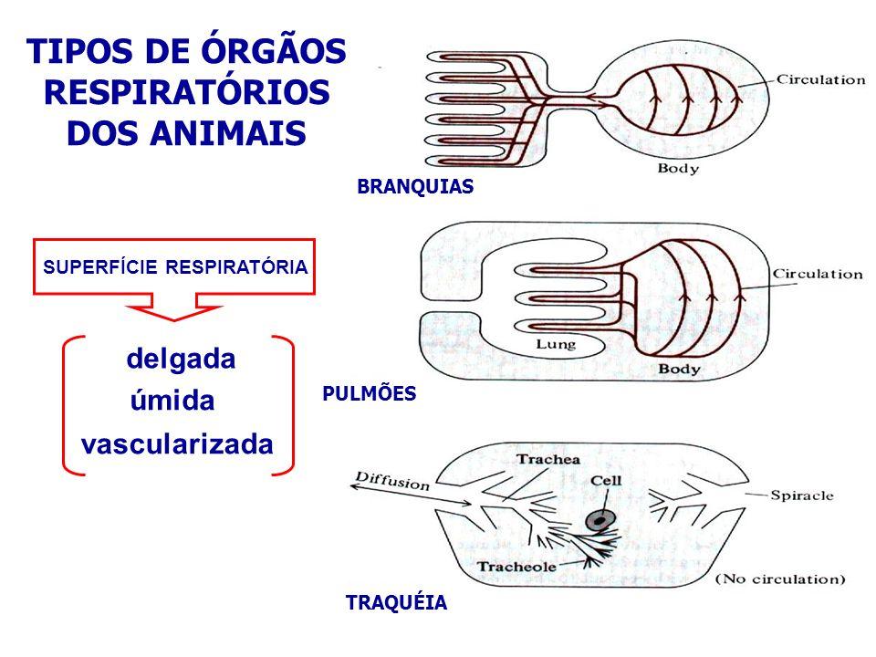 TIPOS DE ÓRGÃOS RESPIRATÓRIOS DOS ANIMAIS