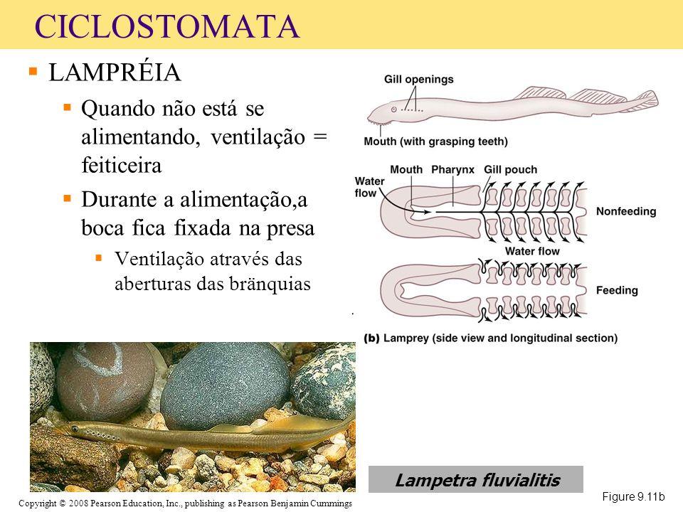 CICLOSTOMATA LAMPRÉIA