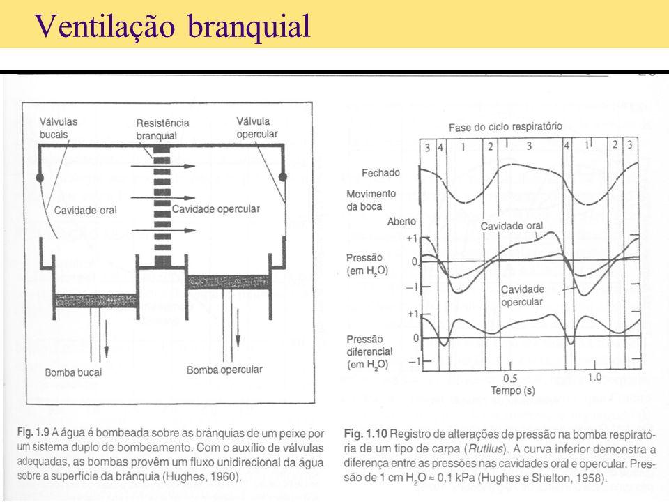 Ventilação branquial