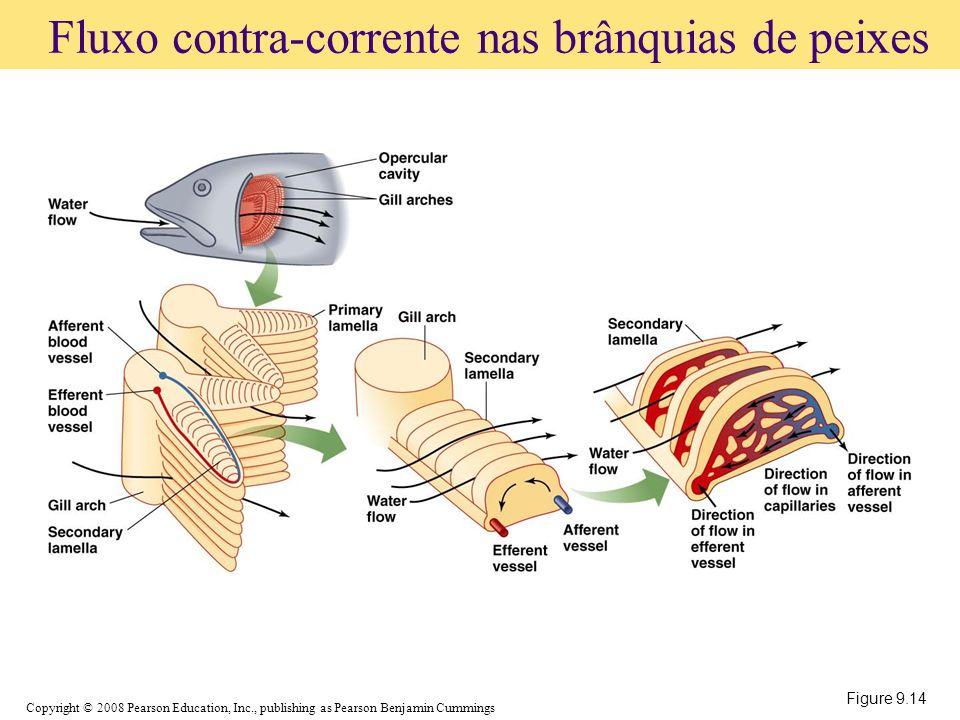 Fluxo contra-corrente nas brânquias de peixes