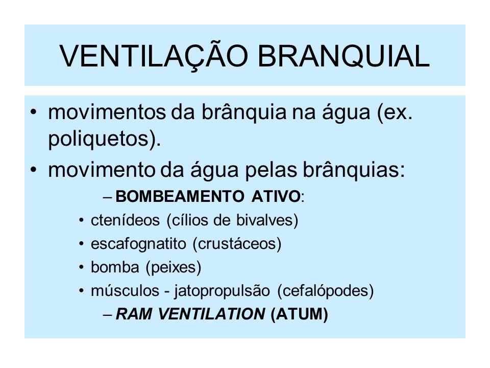 VENTILAÇÃO BRANQUIAL movimentos da brânquia na água (ex. poliquetos).