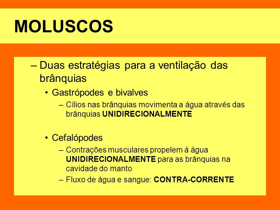 MOLUSCOS Duas estratégias para a ventilação das brânquias