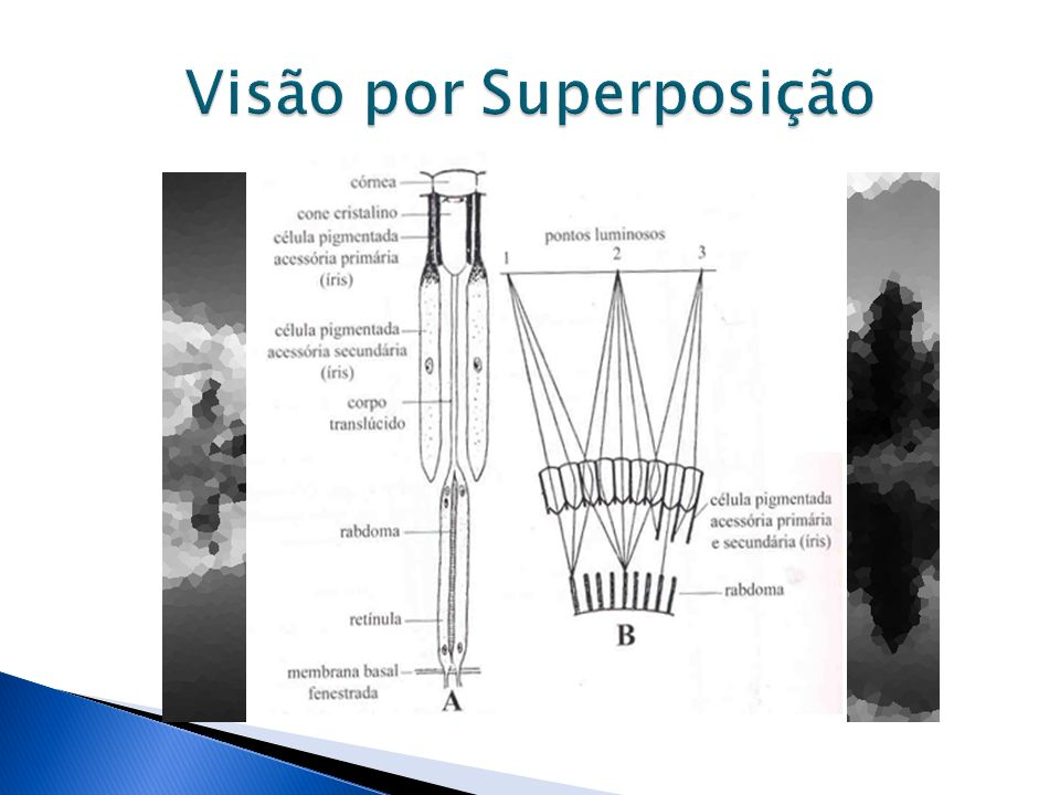 Visão por Superposição