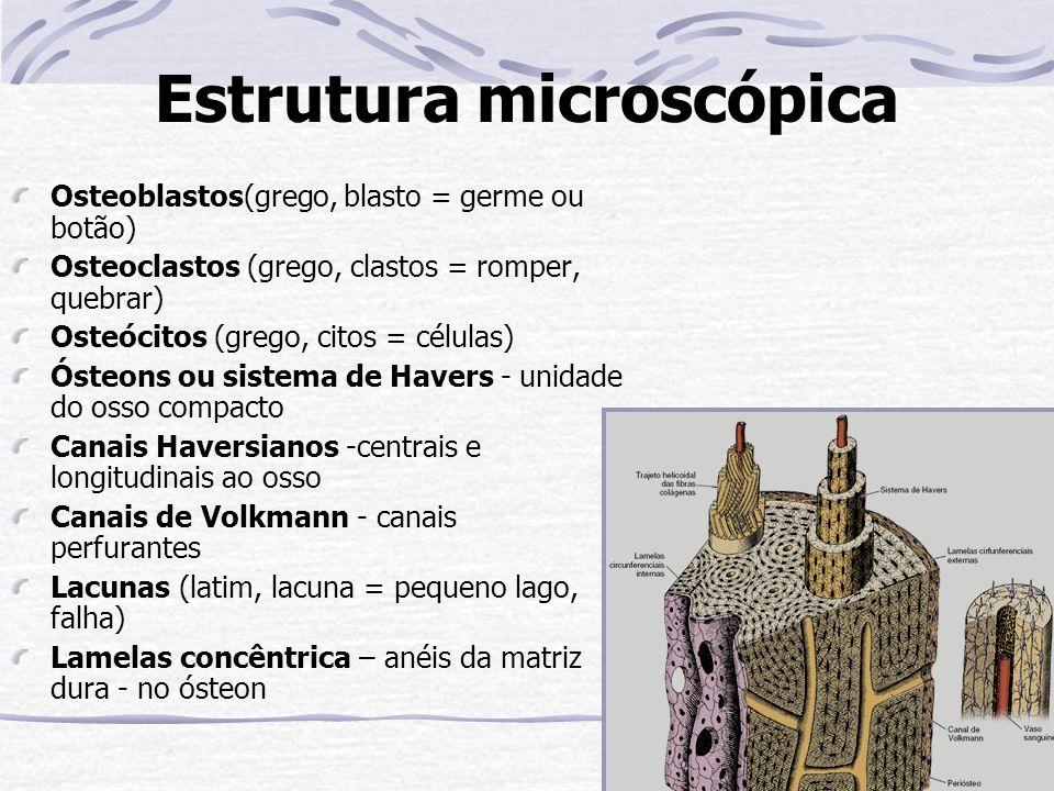 Estrutura microscópica