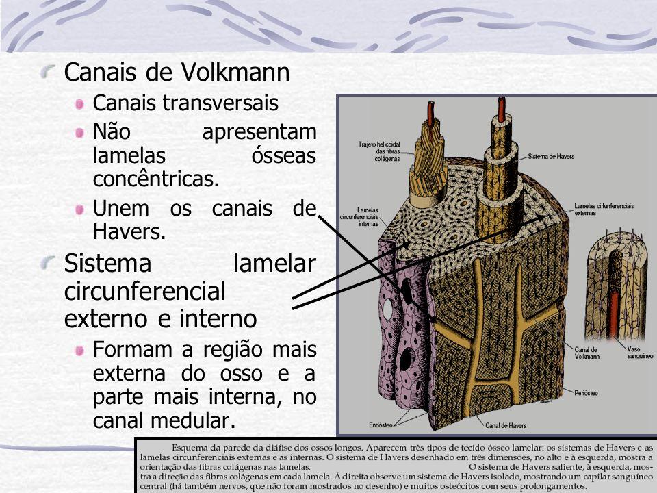 Sistema lamelar circunferencial externo e interno