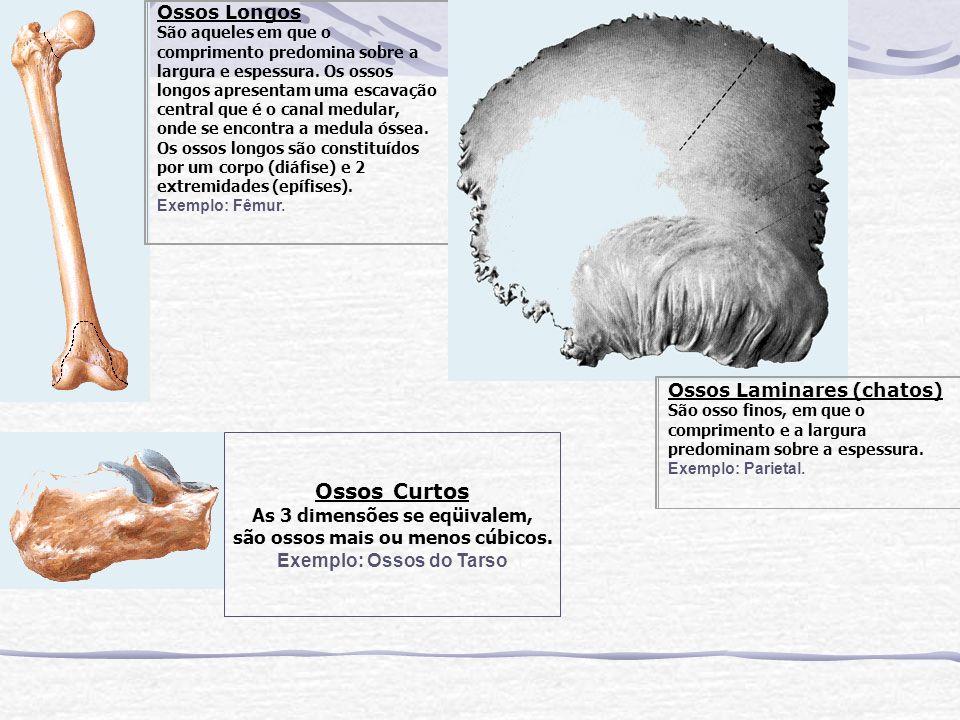 são ossos mais ou menos cúbicos. Exemplo: Ossos do Tarso