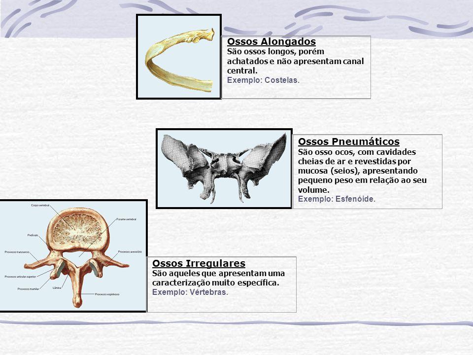 Ossos Alongados São ossos longos, porém achatados e não apresentam canal central. Exemplo: Costelas.