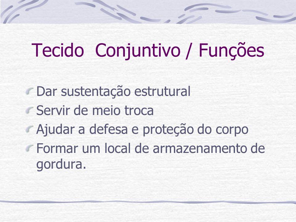 Tecido Conjuntivo / Funções