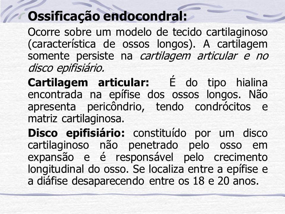 Ossificação endocondral: