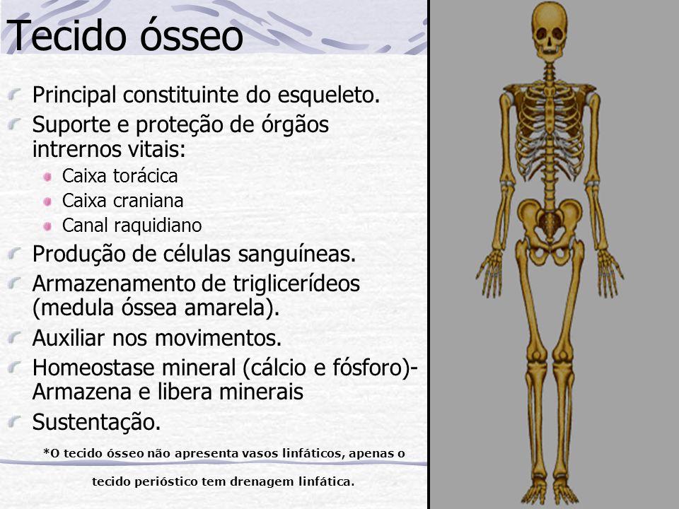 Tecido ósseo Principal constituinte do esqueleto.
