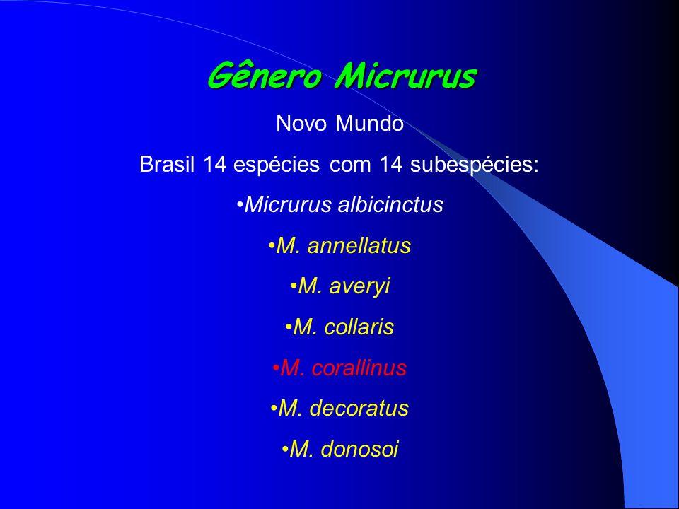 Brasil 14 espécies com 14 subespécies:
