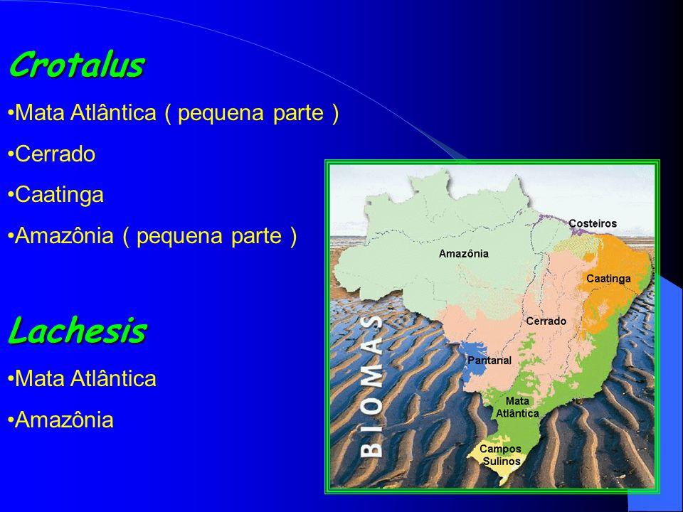Crotalus Lachesis Mata Atlântica ( pequena parte ) Cerrado Caatinga