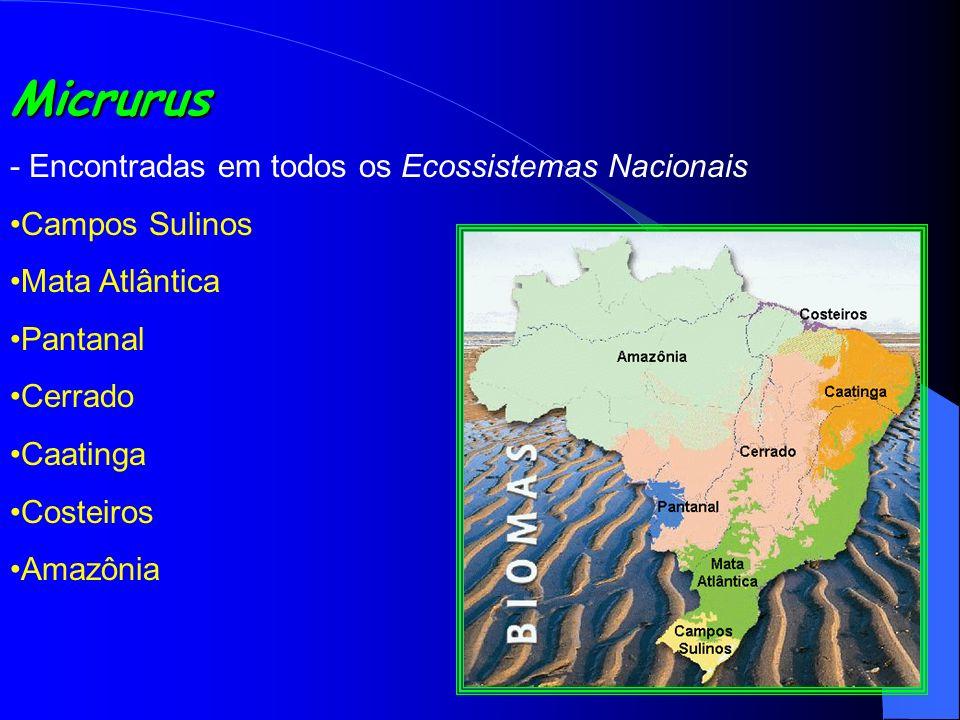 Micrurus - Encontradas em todos os Ecossistemas Nacionais