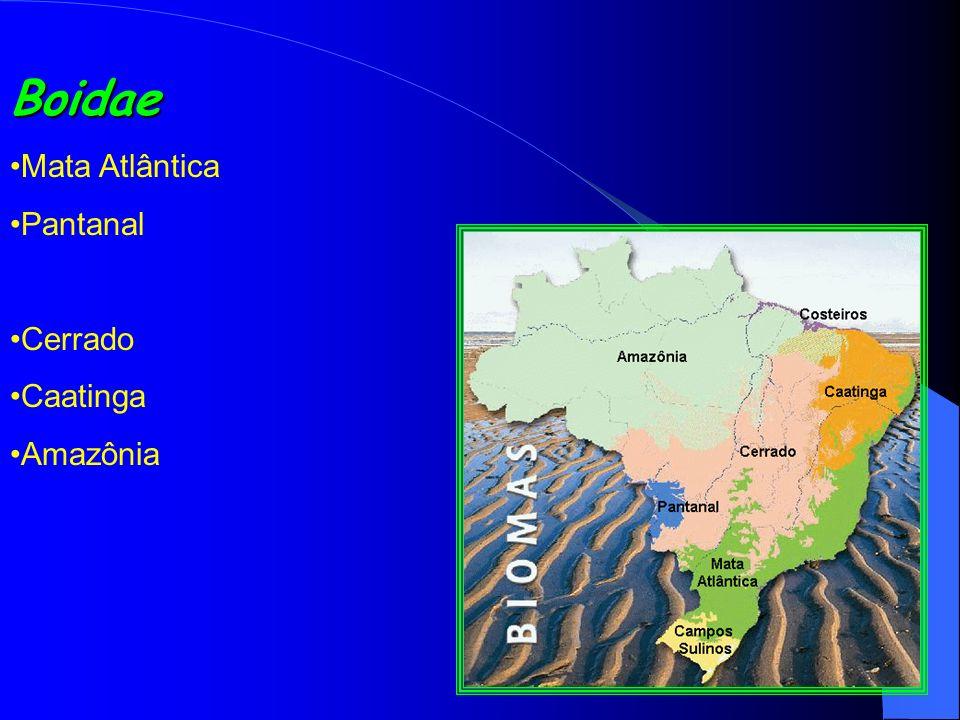Boidae Mata Atlântica Pantanal Cerrado Caatinga Amazônia