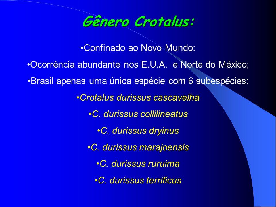 Gênero Crotalus: Confinado ao Novo Mundo: