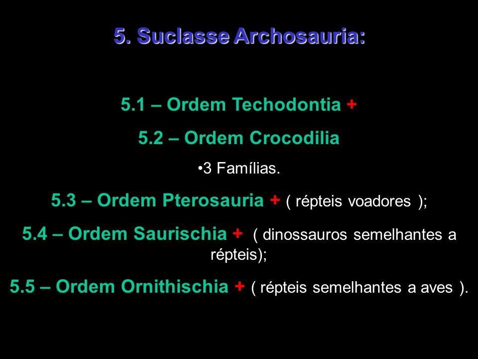 5. Suclasse Archosauria: