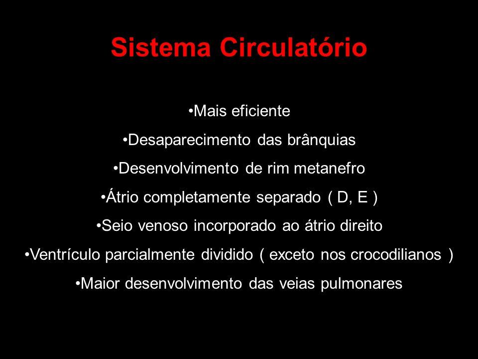 Sistema Circulatório Mais eficiente Desaparecimento das brânquias