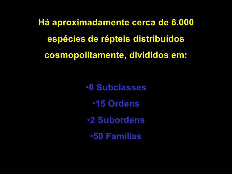 Há aproximadamente cerca de 6.000 espécies de répteis distribuídos
