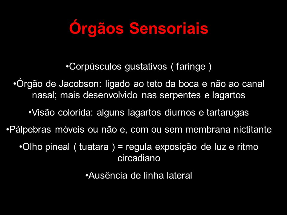 Órgãos Sensoriais Corpúsculos gustativos ( faringe )