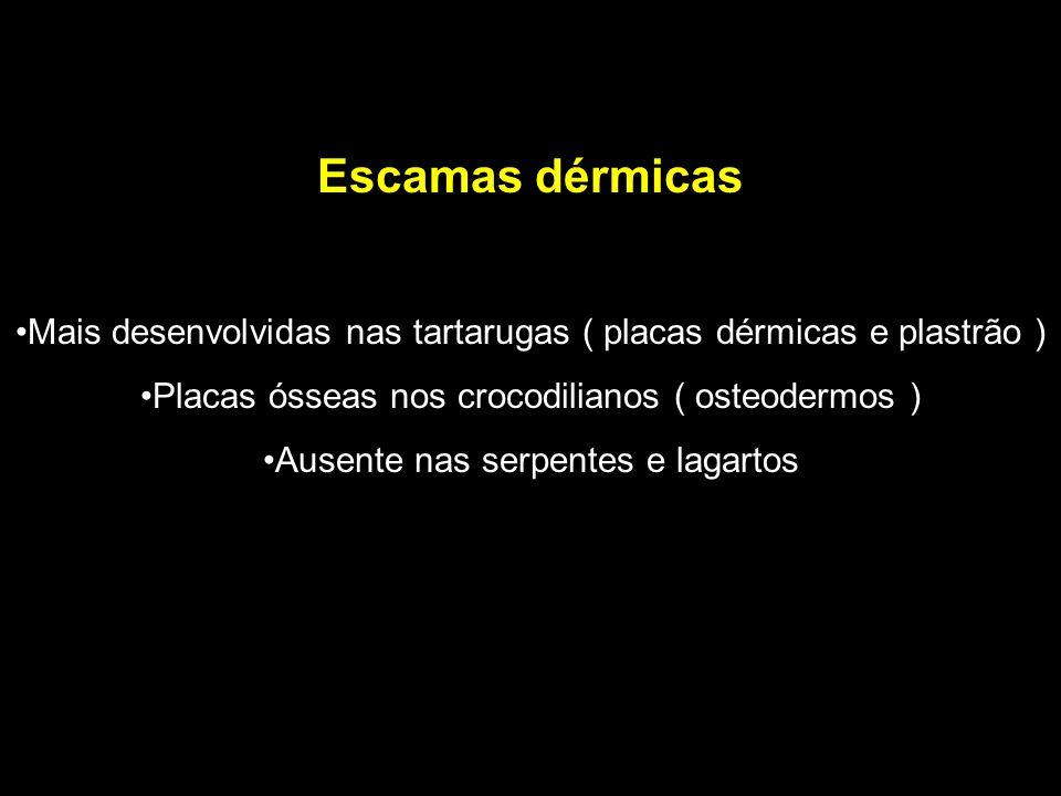 Escamas dérmicas Mais desenvolvidas nas tartarugas ( placas dérmicas e plastrão ) Placas ósseas nos crocodilianos ( osteodermos )