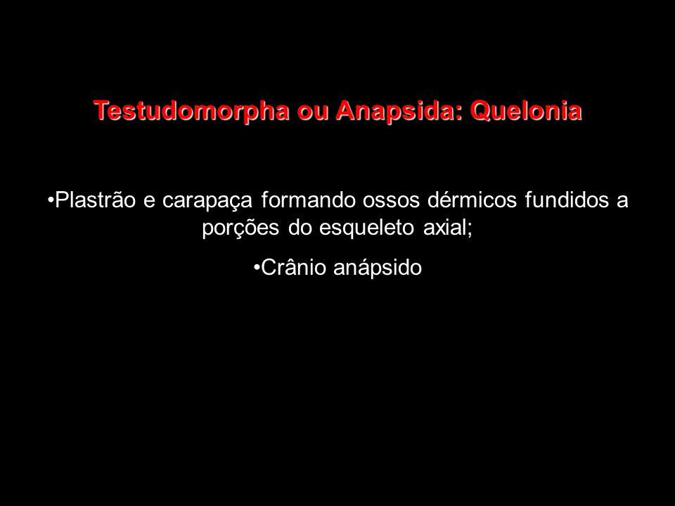 Testudomorpha ou Anapsida: Quelonia