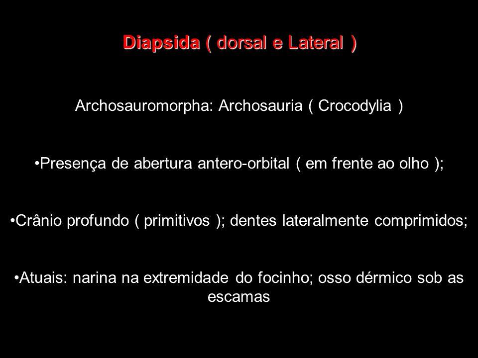 Diapsida ( dorsal e Lateral )