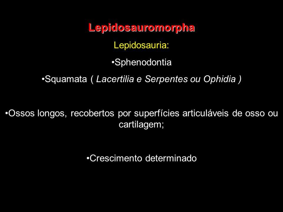 Lepidosauromorpha Lepidosauria: Sphenodontia