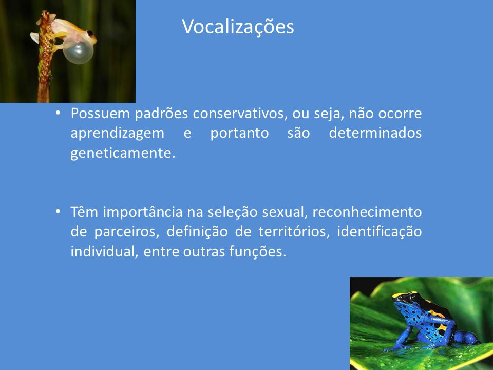Vocalizações Possuem padrões conservativos, ou seja, não ocorre aprendizagem e portanto são determinados geneticamente.