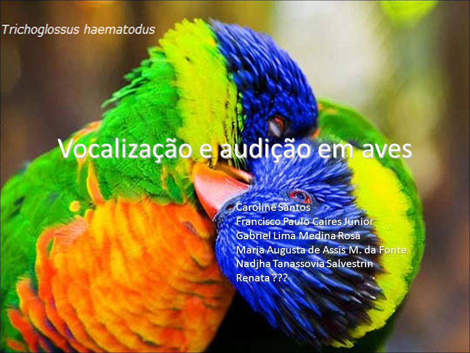 Vocalização e audição em aves