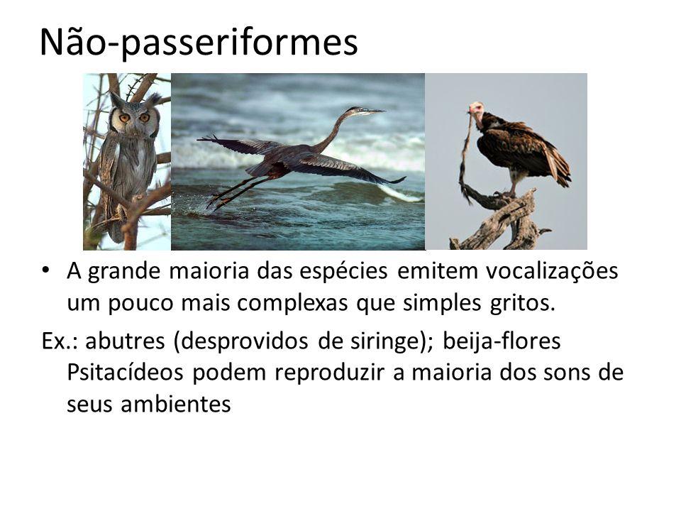 Não-passeriformes A grande maioria das espécies emitem vocalizações um pouco mais complexas que simples gritos.